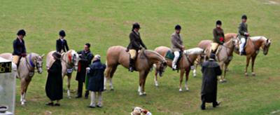 Palomino under saddle winning lineup