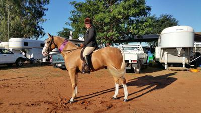 Champion Show Hunter Hack - Charleville